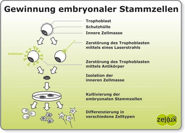 induzierte pluripotente stammzelle
